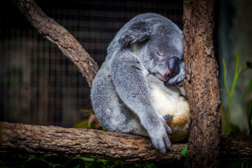 dormire meglio favorire sonno migliorare qualità del sonno