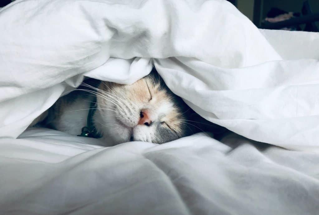 dormire bene meglio favorire sonno migliorare qualità del sonno]